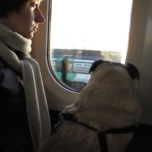 pug, train, dog, london, south eastern rail